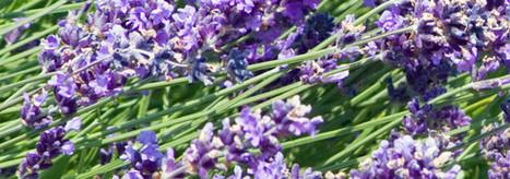 6 Essential Oils For Headache Relief   Headaches   Scoop.it