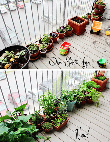 The Toddler Garden, Updated!  My Great Outdoors | Urban Farms | Scoop.it