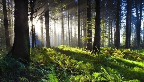 21 reasons why forests are important | Forest | Scoop.it