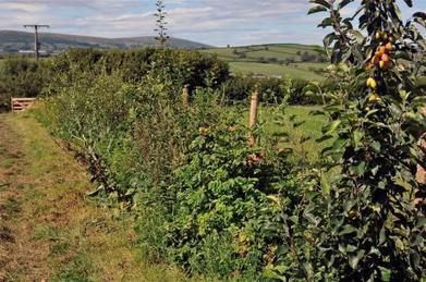 Replanting hedgerows using permaculture design | Permaculture Magazine | Permaculture Design Review | Scoop.it