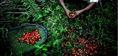 Unilever Pledges 100% Traceable Palm Oil by End of 2014 | Sustainable Brands | Healthy Recipes and Tips for Healthy Living | Scoop.it