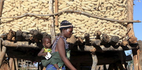 Investing in science can help put food on Africa's plates | RoundUp: Research Uptake | Scoop.it