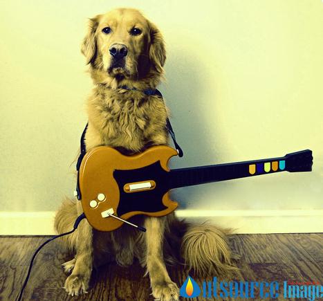 Pet photography retouching service | Image Editing Services in india, image editing services. | Scoop.it