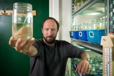 Israel fish research to help aquaponics and fish farming? - Green Prophet | Aquaponics~Aquaculture~Fish~Food | Scoop.it