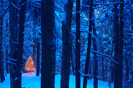 History of Christmas Trees | Christmas Trees and More | Scoop.it