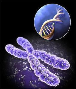 Social Disadvantage Creates Genetic Wear and Tear   Psychology, Sociology & Neuroscience   Scoop.it
