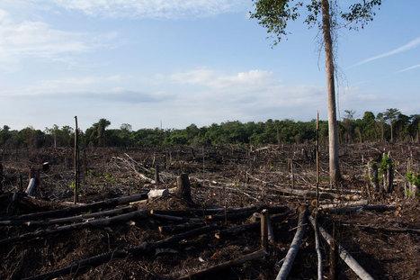 La planète se détériore plus vite que prévu, mais il n'est pas trop tard pour agir, selon un rapport de l'ONU | Forêt, Bois, Milieux naturels : politique, législation et réglementation | Scoop.it