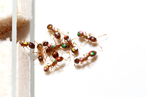 Scientists discover that ants, like humans, can change their priorities | for better life... | Scoop.it