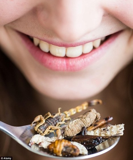 From fried insects to coffee with BUTTER: The weird and wonderful foods we will all be eating this summer. | Entomophagy: Edible Insects and the Future of Food | Scoop.it