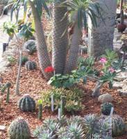 (en fotos) Jardín Botánico de Las Tunas | cuba ciencia | Scoop.it