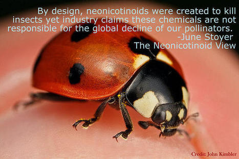 Neonicotinoids: What Will You Do The Day The Buzzing Stops? | Sustain Our Earth | Scoop.it