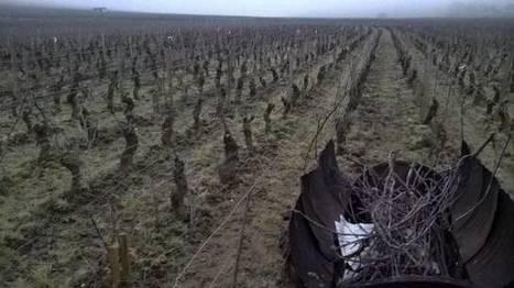 Femmes, vignes et vin. | Vin Vignes et femmes | Scoop.it