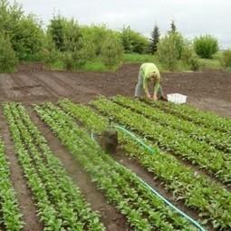 SPIN Farming: Growing Urban Farmers « JOURNAL OF HUMANITARIAN AFFAIRS | Vertical Farm - Food Factory | Scoop.it