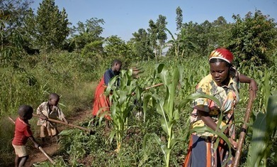 Mind the gap: closing gender divide in African agriculture could reduce hunger | Sustainable Futures | Scoop.it