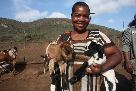Climate Change, A Goat Farmer's Gain | Inter Press Service | CGIAR Climate in the News | Scoop.it