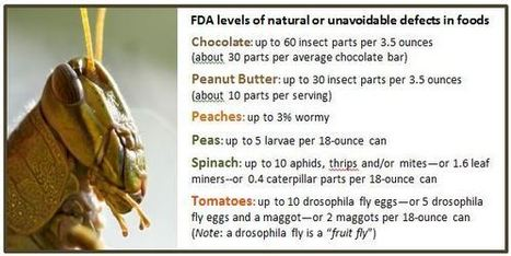 Nutritious, Cheap, and Plentiful –Why not eat insects? | Entomophagy: Edible Insects and the Future of Food | Scoop.it