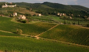 Chianti : le Baron Ricasoli fait homologuer ses clones de sangiovese | Articles Vins | Scoop.it