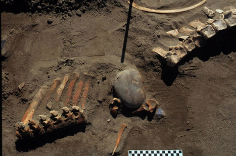 Horses hunted in North America 13,300 years ago, research shows | Horses in art and history | Scoop.it