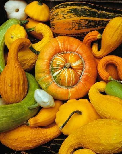 Fall Foods that Benefit Your Skin & Hair - Yahoo News | dermatology | Scoop.it