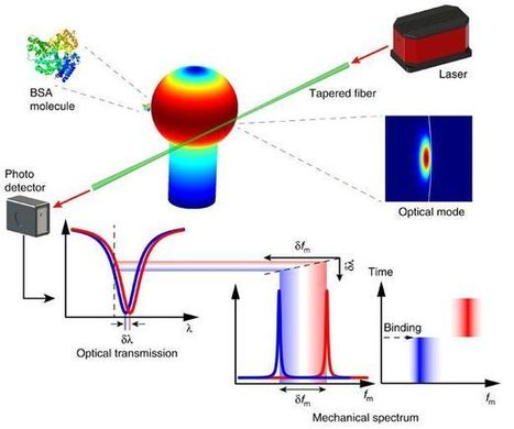 Optical spring detects single molecules | Amazing Science | Scoop.it