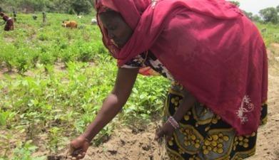In Bénin, women cotton growers embrace organic agriculture   UNDP   Organic Sky Art   Scoop.it