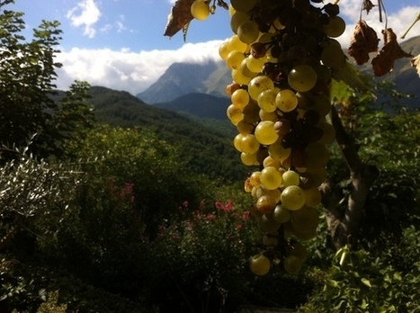 Le Marche Wine in Canada | Wines and People | Scoop.it