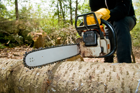 Situations That Require the Expertise of a Tree Removal Specialist » CJ S Tree Service of Omaha | Tree Service | Scoop.it