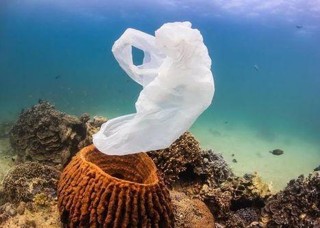 Le mystère des déchets plastique manquants dans l'océan | SoFrenchy | Scoop.it