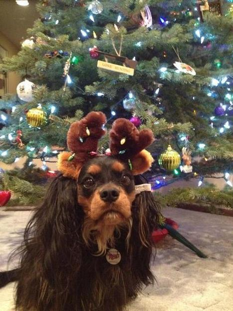 25 Pets Who Are Already In The Holiday Mood | Animals Make Life Better | Scoop.it