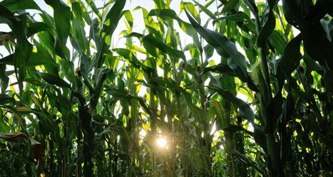 Serons-nous tous végétariens en 2050 ? - Le Monde (Blog) | alternatives agricoles | Scoop.it