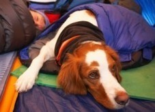 What to know before you camp with your dog | Pet Health | Embrace Life | Best Health | Pets Decisions | Scoop.it