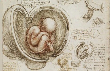 Download the Sublime Anatomy Drawings of Leonardo da Vinci: Available Online, or in a Great iPad App | e.cloud | Scoop.it