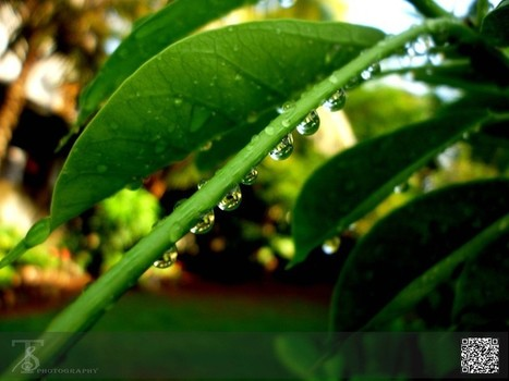 Beauty of Rain Drops... - Nature Photography | All about nature | Scoop.it