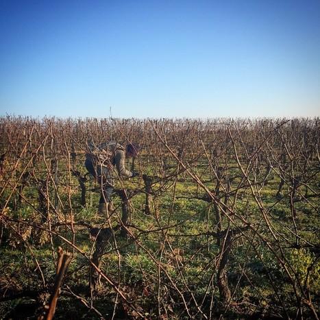 Bordeaux Wines | Blog | Springtime in Bordeaux | Planet Bordeaux - The Heart & Soul of Bordeaux | Scoop.it