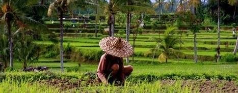 Une alternative soutenable pour nourrir le monde ? Focus sur l'agroécologie : MUSE D.Territoires | Cultiver la terre autrement | Scoop.it