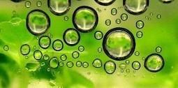 themavision.fr - Biocarburants 1ère, 2ème et 3ème génération | Biocarburants de 3ème génération | Scoop.it