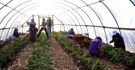New Urban Ag Network Will Transform Vacant Lots Into Farmland | Vertical Farm - Food Factory | Scoop.it