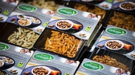 Belgia hullaantui matoburgereihin ja toukkatahnoihin | Maantiede | Scoop.it