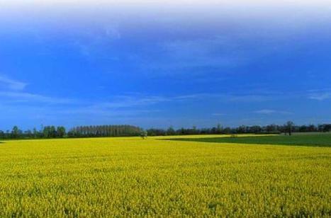 En el campo | Biomas del Uruguay para tercer grado | Scoop.it