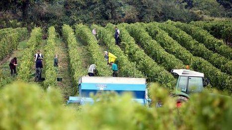 Vins des Coteaux du Loir et Jasnières : la moitié des vignes touchées par le gel d'avril | Verres de Contact | Scoop.it
