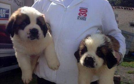 Charente : saisie de 160 chiens maltraités dans un élevage | CaniCatNews-actualité | Scoop.it