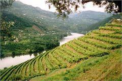 Alto Douro Vinhateiro - Turismo do Douro faz balanço «positivo» de 10 anos de Património da Humanidade | Carpe Diem | Scoop.it