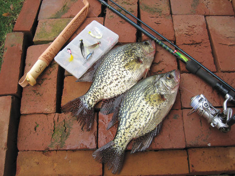 Catching Crappies From Shore - In-Fisherman | Freshwater Fishing | Scoop.it