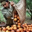 Les oranges brésiliennes ont un goût amer | FairTrade | Scoop.it