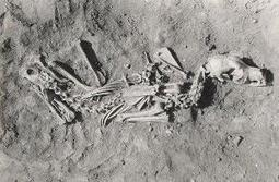 201306048618 | What prehistoric dog burials tell us about owners | Science is Cool! | Scoop.it