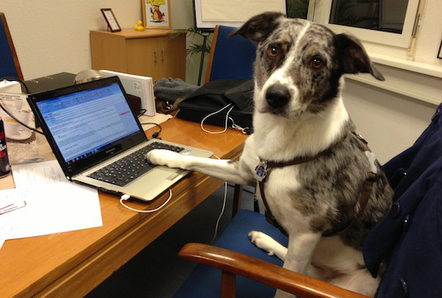 Haustiere im Büro: Kollege Hund und Katze | BREADHUNTER - Int. Executive Search, Vienna | Scoop.it
