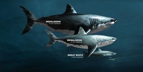 Cooper River – Diving for Megalodon Shark Fossils | DiverSync | Scoop.it