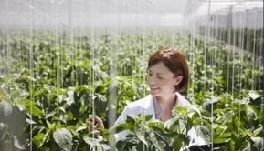 5 motivos para emprender en agricultura - Noticias Universia   Agricultura   Scoop.it