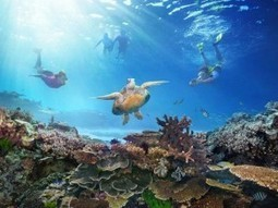 """After prolonged """"illness"""", Great Barrier Reef declared dead - Travelandtourworld.com 