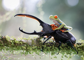 The 2014 Sony World Photography Awards   Photography   Scoop.it